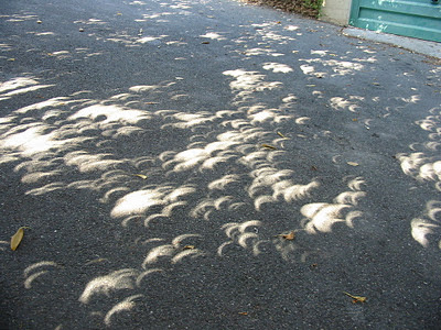 CrescentEclipseProjections